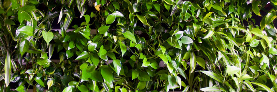 Living plant walls at the Mightybytes office